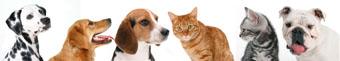 091230_dog&cat.jpg